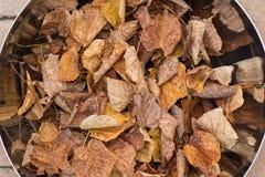 Cuvette métallique avec des feuilles (automne) Photos stock
