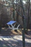 Cuvette pour des oiseaux sur un arbre Images libres de droits