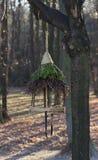 Cuvette pour des oiseaux sur un arbre Photo libre de droits