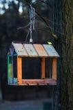 Cuvette pour des oiseaux sur un arbre Photo stock