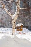 Cuvette pour des oiseaux sur un arbre Photographie stock libre de droits