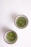Cuvettes de thé japonaises vertes Photographie stock libre de droits
