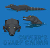 Cuvier`s Dwarf Caiman Cartoon Vector Illustration Royalty Free Stock Image