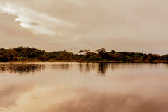 Cuyabeno River, Amazonian Jungle royalty free stock image