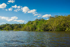 Cuyabeno river, rainforest, terrain of Siona indigenous people. Transport by the river by motorboats, great place to. Visit, jungle, lots of animals. in Royalty Free Stock Photos