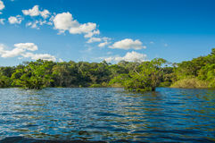 Cuyabeno river, rainforest, terrain of Siona indigenous people. Transport by the river by motorboats, great place to. Visit, jungle, lots of animals. in Stock Images
