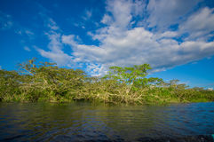 Cuyabeno river, rainforest, terrain of Siona indigenous people. Transport by the river by motorboats, great place to. Visit, jungle, lots of animals. in Stock Image