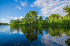 Cuyabeno river, rainforest, terrain of Siona indigenous people. Transport by the river by motorboats, great place to. Visit, jungle, lots of animals. in Royalty Free Stock Photo