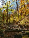 Fall color at Cuyahoga National Park. Spectacular wooded scene and fall foliage color at Cuyahoga National Park near Cleveland, Ohio Stock Photography