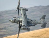 CV22白鹭的羽毛直升机V22 库存照片