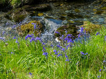 Cwm Pennant stream Royalty Free Stock Images