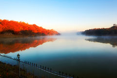 The cyan lake and red forest Stock Photos