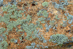 Cyan lichen on rock Royalty Free Stock Photos