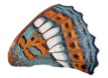 Cyan and orange single butterfly wing on white. Cyan and orange single butterfly wing isilated on white background stock photos