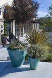 Cyan pots with plants on walkway Stock Image