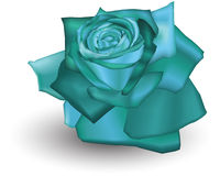 Cyan Rose. Illustration of a Cyan coloured rose Royalty Free Stock Images