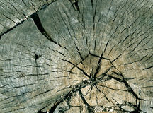 Cyan toned old tree cut surface. Stock Photography