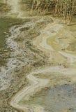 Cyanobacteria Fotografie Stock Libere da Diritti