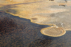 Cyanobacteria and Algae. Some areas in Yellowstone are cool enough to allow the formation of algae and cyanobacteria. This mat is floating on the top of one such royalty free stock photos