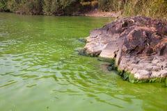 Cyanobacteria in Taihu lake. Serious pollution in China's Taihu Lake Cyanobacteria stock image