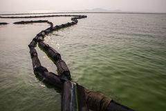 Cyanobacteria in Taihu lake. Serious pollution in China's Taihu Lake Cyanobacteria royalty free stock photography