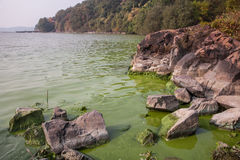 Cyanobacteria in Taihu lake. Serious pollution in China's Taihu Lake Cyanobacteria stock photography