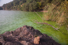 Cyanobacteria in Taihu lake. Serious pollution in China's Taihu Lake Cyanobacteria royalty free stock images