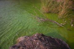 Cyanobacteria in Taihu lake. Serious pollution in China's Taihu Lake Cyanobacteria royalty free stock image