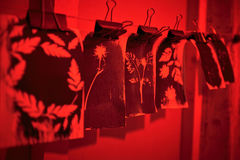 Cyanotype process in the red room. A piece of paper with the prints plants hanging in the Red Room during the cyanotype Stock Photo