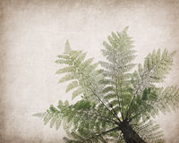 Cyathea op antiquiteit gebarsten document stock fotografie
