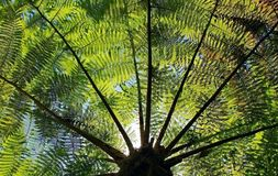 Cyatheaceae, die Anlage vom acient Dinosaurieralter Lizenzfreie Stockfotografie