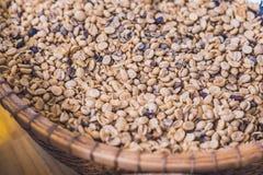 Cybet kawa, Kopi Luwak, łasica kawa, surowy materiał dla rzadkiego Fotografia Royalty Free