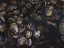 Cybeta kawa piec bobowy herbaciany czerń i kolor barwimy produkt sprzedaży biznes w górę i r w górę Tajlandia zdjęcia stock