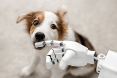 Cyborg or robot hand with a puppy. Cyborg or robot hand is holding his finger to a puppy, sitting on the floor. concept cybernetic or robotic royalty free stock photography