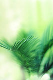 Cycad Stock Images