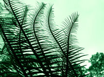 Cycad - abrégé sur centrale photographie stock