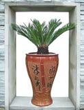 Cycad del florero y del sagú de la porcelana Imagen de archivo