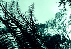 Cycad - Plant abstract Royalty Free Stock Image