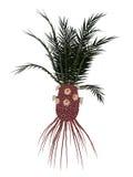 Cycadeoidea gigantea prehistoric plant - 3D render Royalty Free Stock Image