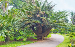 The cycads collection Stock Photos