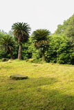 Cycads and grassy lawn in sunny winter Royalty Free Stock Photo