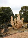 Cycads i rissugrör på den Ninomaru trädgården, Nijo slott, Kyoto, Japan Royaltyfria Bilder