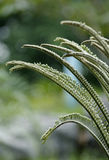 Cycads Royalty Free Stock Photos