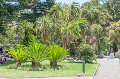 Cycads and palm trees in the Company Garden Royalty Free Stock Photo