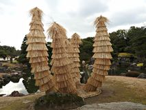 Cycads in Rice Straw at Ninomaru Garden, Nijo Castle, Kyoto, Japan Royalty Free Stock Image