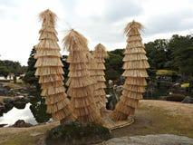 Cycads w Ryżowej słomie przy Ninomaru ogródem, Nijo kasztel, Kyoto, Japonia Obraz Royalty Free