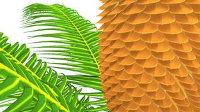 Cycas plant Royalty Free Stock Photo