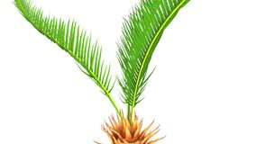 Cycas roots Stock Photography