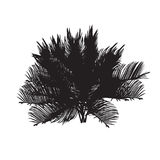 Cycas silhouette black and white Royalty Free Stock Images