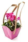 cyclaam粉红色 免版税库存图片